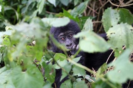 Bild Kinshasa