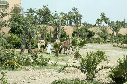 Städtereise nach Casablanca