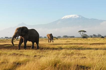 Flüge - Von, nach und ab Kenia günstig buchen