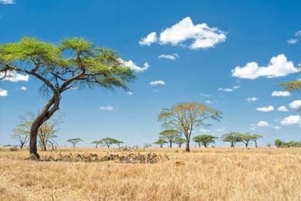 Flüge - Von, nach und ab Sambia günstig buchen
