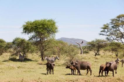 Flüge - Von, nach und ab Simbabwe günstig buchen