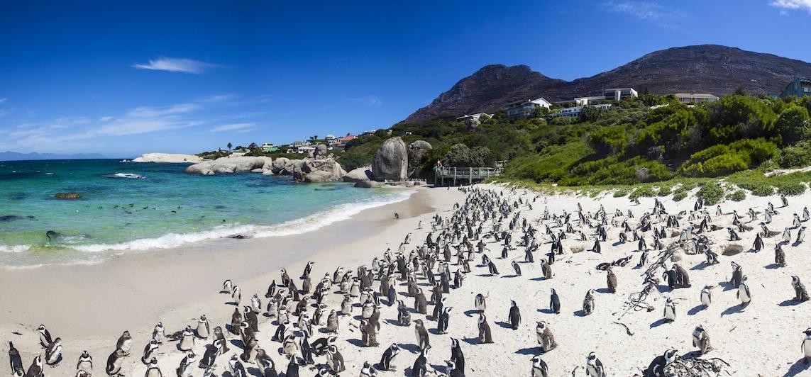 Bild Kapstadt