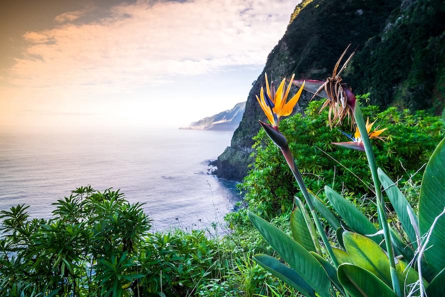 Bild Funchal (Madeira)