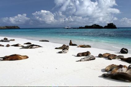 Bild Galapagos Islands