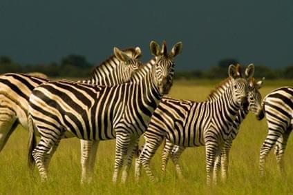 Bild Lilongwe