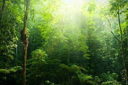 Flüge - Von, nach und ab Papua-Neuguinea günstig buchen